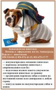 Air transportation of animals. Assistance in registration of docs. Air courier