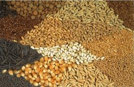 Corn, wheat, barley, rye, oats, grain waste will buy