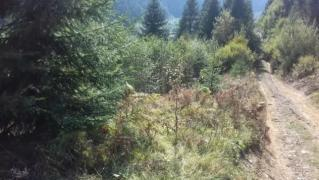 Sale of land in the Tract Black River
